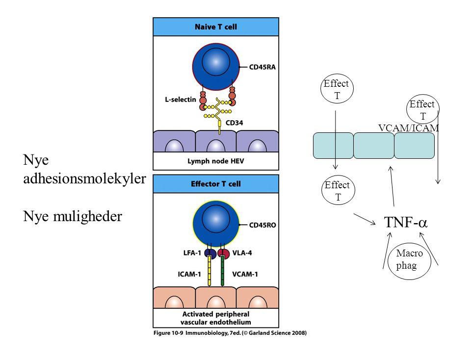 Nye adhesionsmolekyler Nye muligheder Effect T Effect T TNF-  VCAM/ICAM Effect T Macro phag