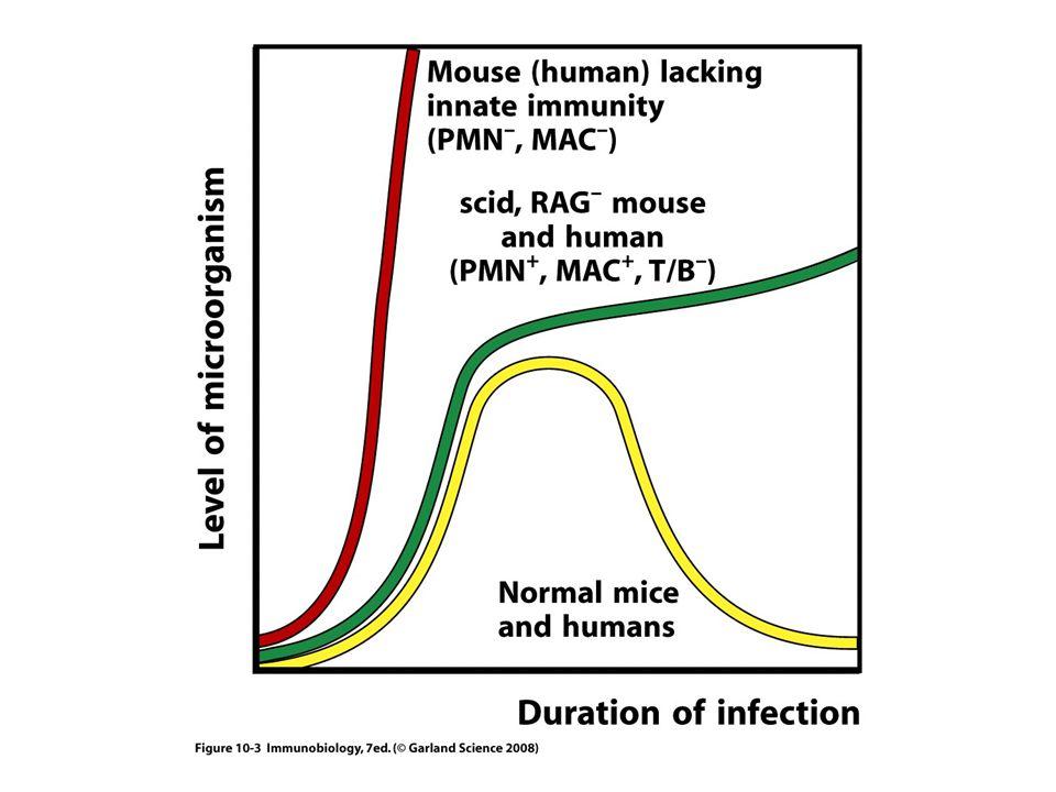 Inhibition af andre CD4 T celler