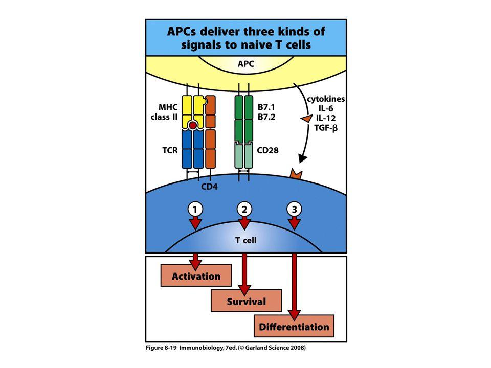 Memory T-cells