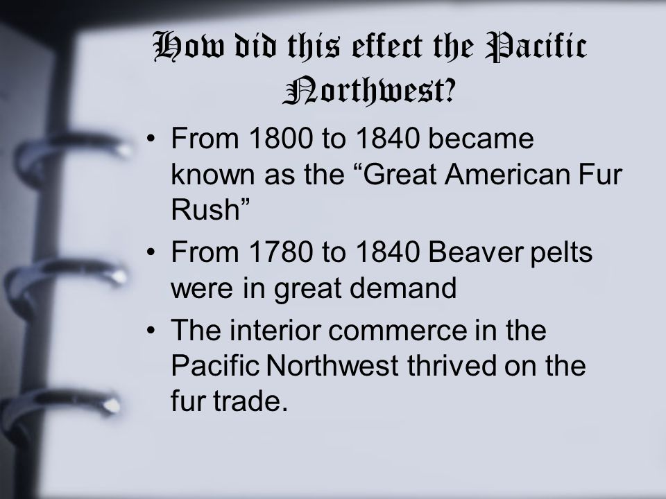 "How did this effect the Pacific Northwest? From 1800 to 1840 became known as the ""Great American Fur Rush"" From 1780 to 1840 Beaver pelts were in grea"