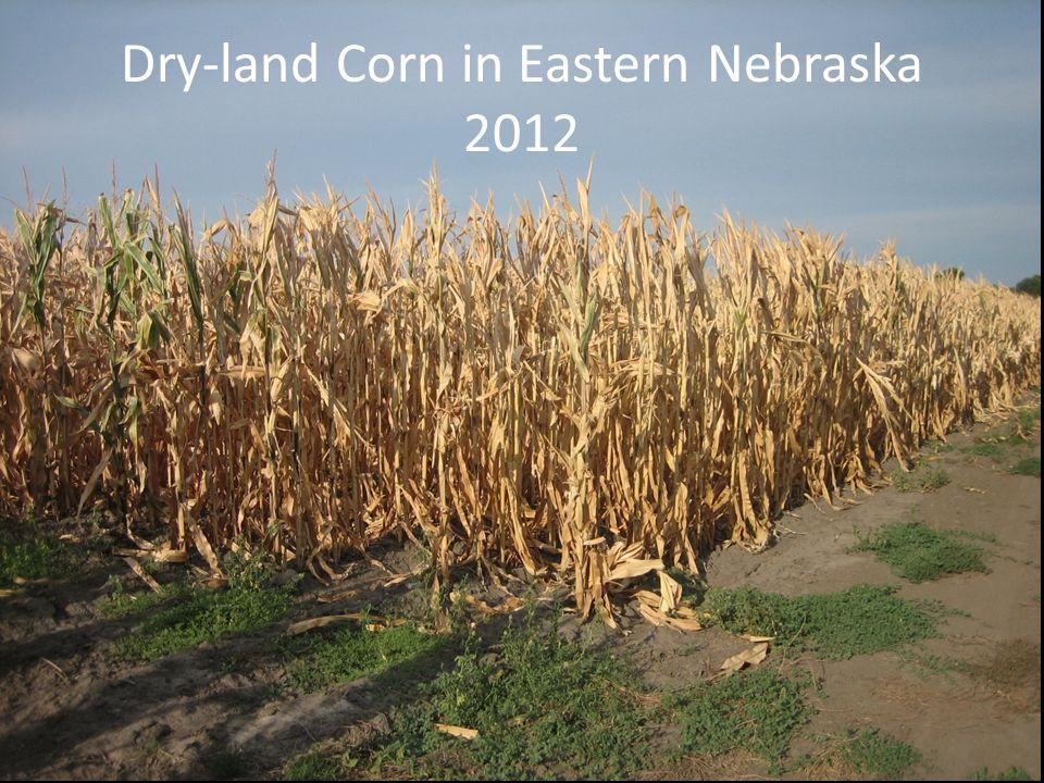 Dry-land Corn in Eastern Nebraska 2012