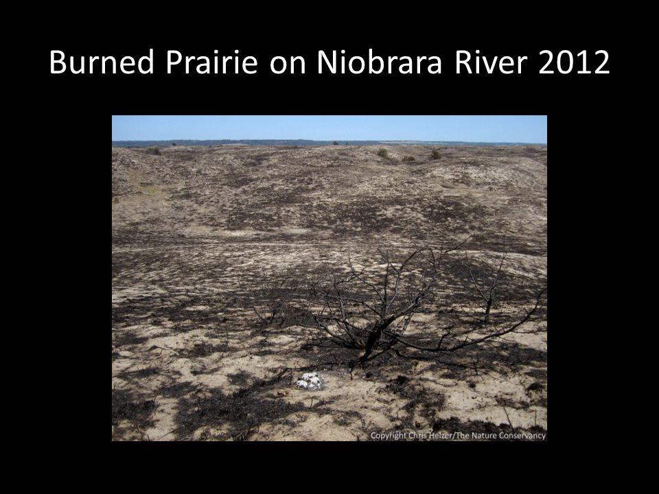 Burned Prairie on Niobrara River 2012