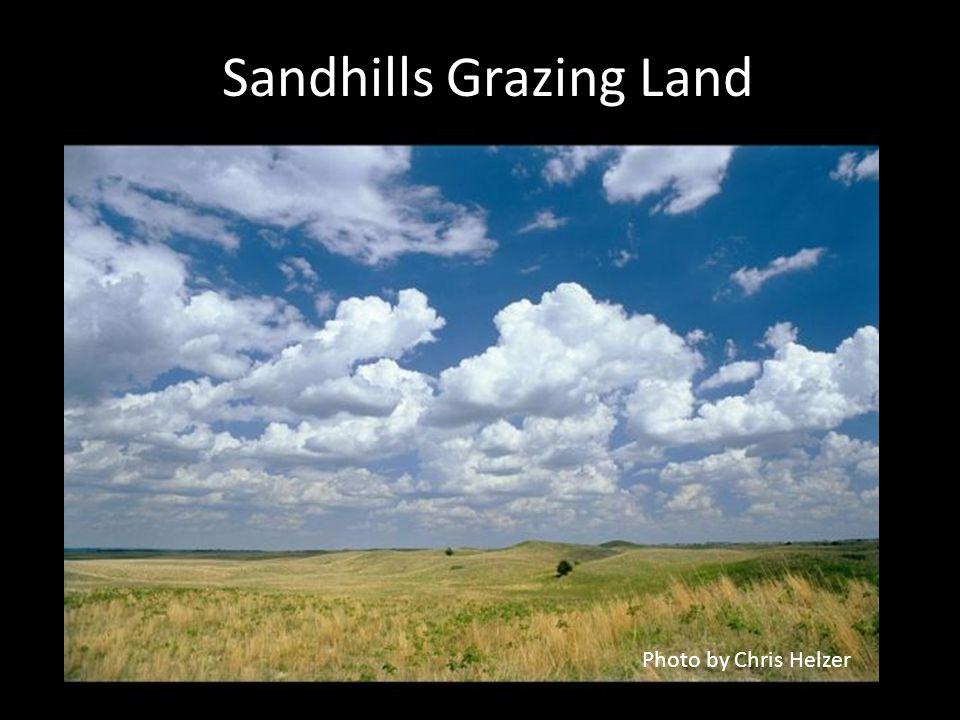 Sandhills Grazing Land Photo by Chris Helzer