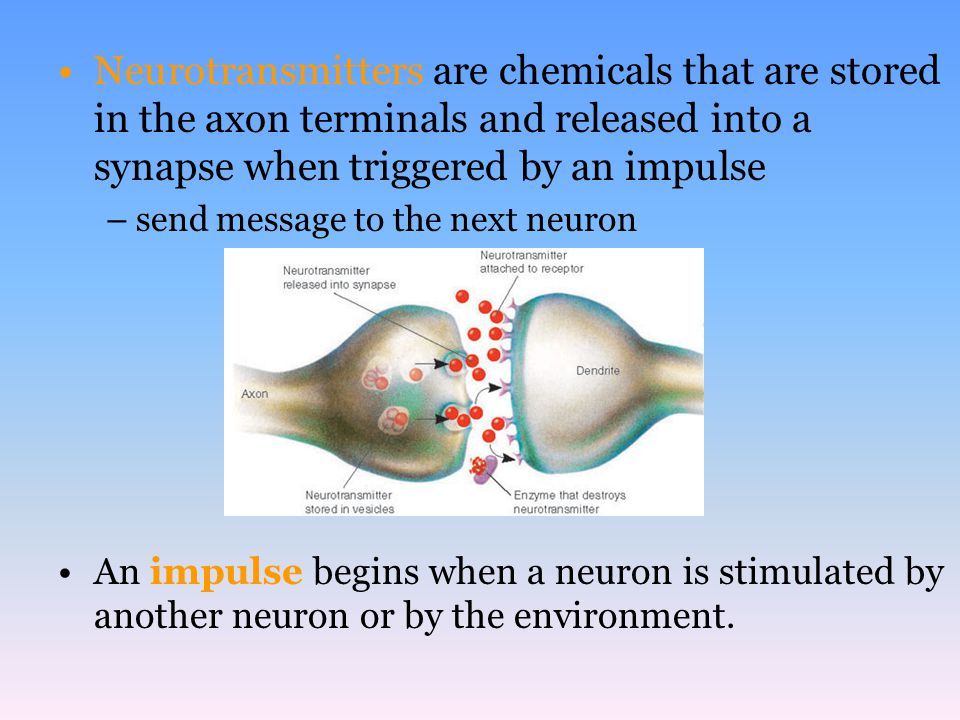 Neurotransmitters are chemicals that are stored in the axon terminals and released into a synapse when triggered by an impulse –send message to the ne