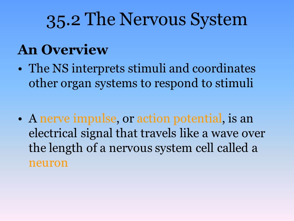 Cells of the NS Neurons include: –Sensory neurons transmit impulses from the environment to the spinal cord and brain –Motor neurons carry instructions from the brain and spinal cord to muscles and glands –Interneurons are the most abundant and transmit signals from one neuron to another