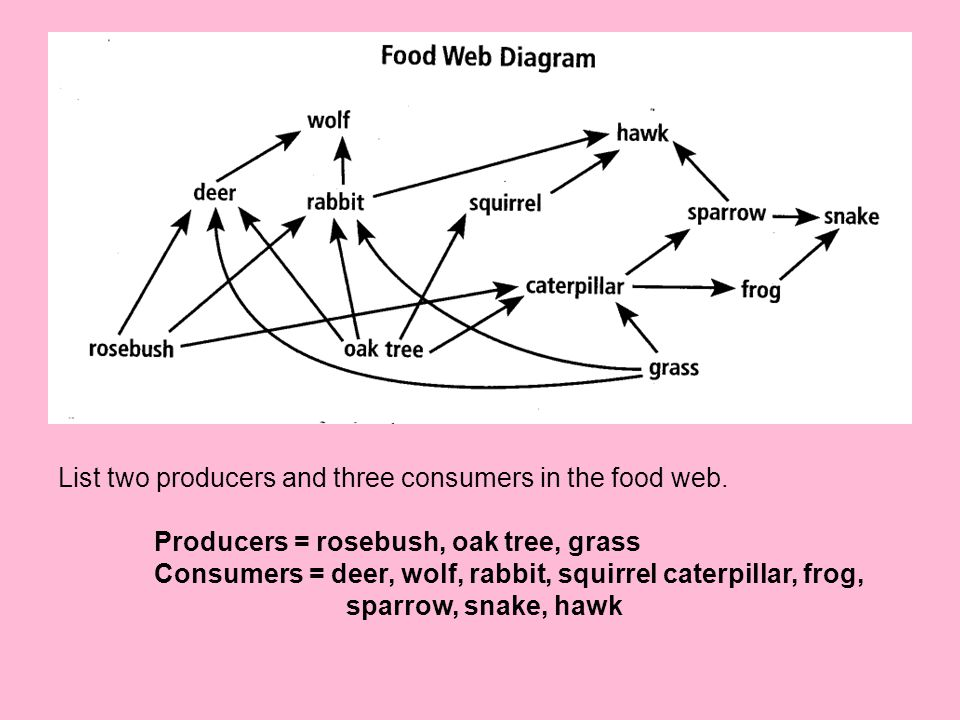 List two producers and three consumers in the food web. Producers = rosebush, oak tree, grass Consumers = deer, wolf, rabbit, squirrel caterpillar, fr
