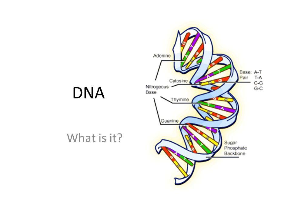 DNA What is it?