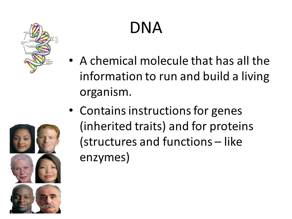 DNA A chemical molecule that has all the information to run and build a living organism. Contains instructions for genes (inherited traits) and for pr