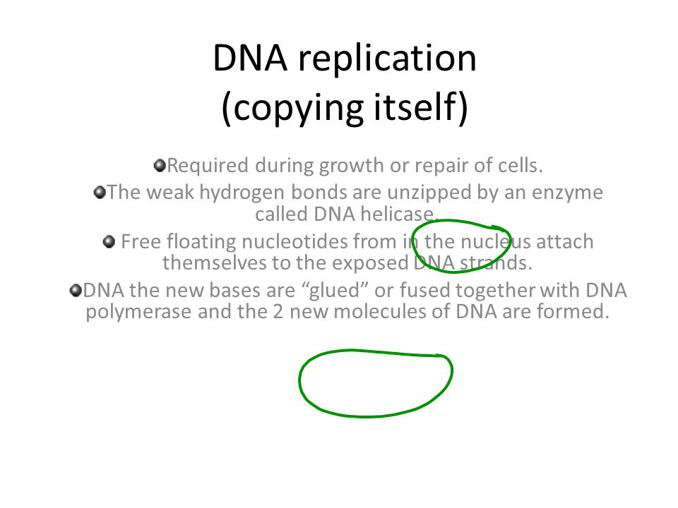 DNA replication (copying itself) Required during growth or repair of cells. The weak hydrogen bonds are unzipped by an enzyme called DNA helicase. Fre