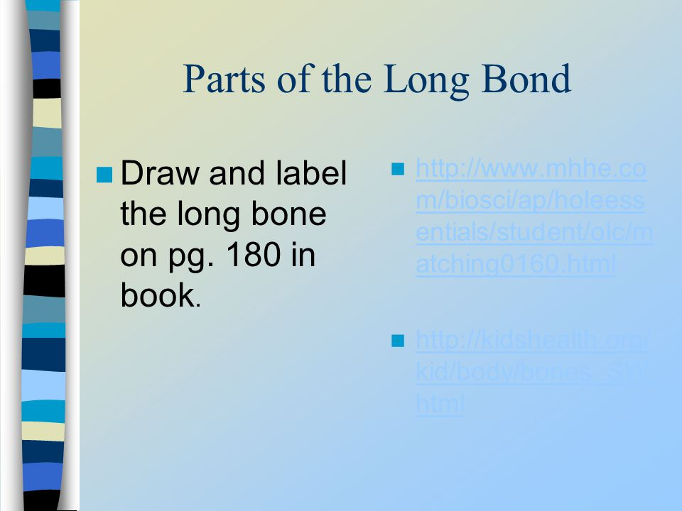 Parts of the Long Bond Draw and label the long bone on pg. 180 in book. http://www.mhhe.co m/biosci/ap/holeess entials/student/olc/m atching0160.html