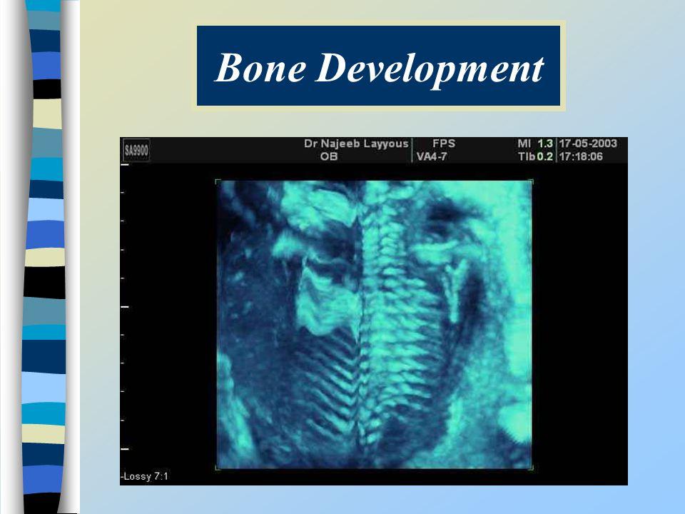 Bone Development