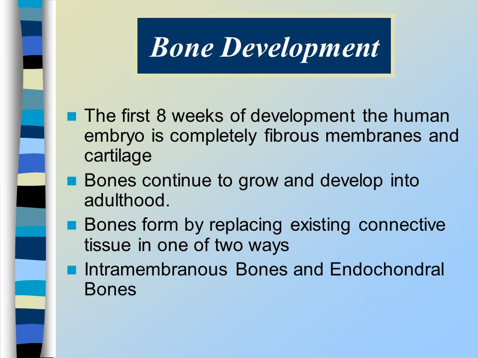 The first 8 weeks of development the human embryo is completely fibrous membranes and cartilage Bones continue to grow and develop into adulthood. Bon
