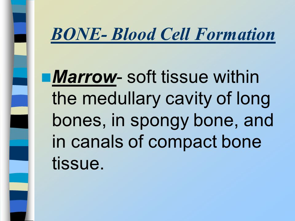 BONE- Blood Cell Formation Marrow- soft tissue within the medullary cavity of long bones, in spongy bone, and in canals of compact bone tissue.