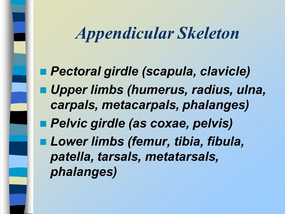Appendicular Skeleton Pectoral girdle (scapula, clavicle) Upper limbs (humerus, radius, ulna, carpals, metacarpals, phalanges) Pelvic girdle (as coxae