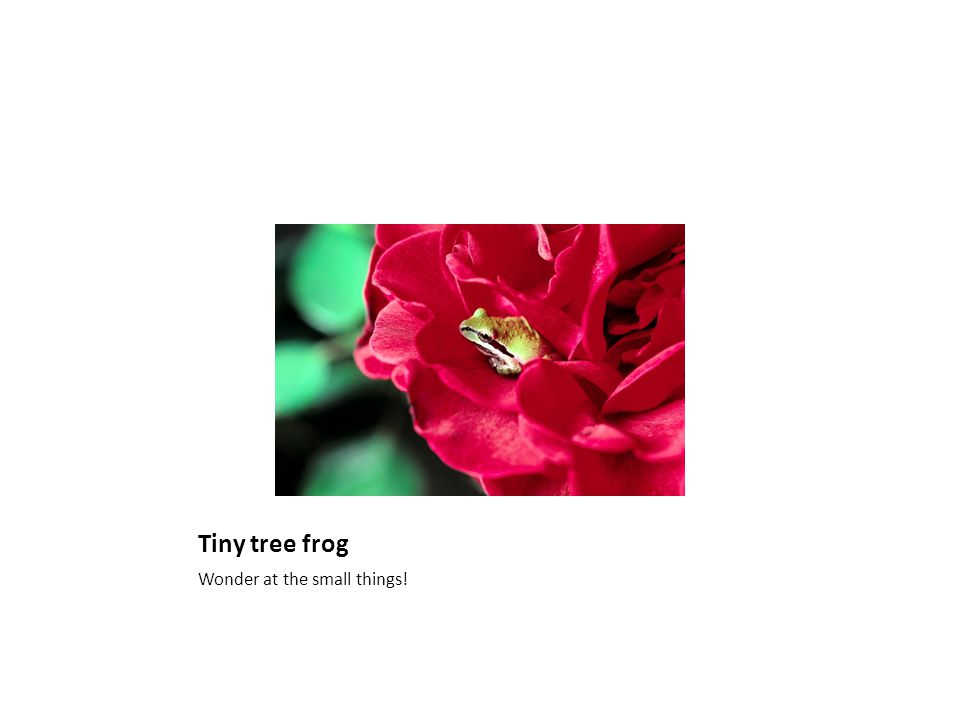 Tiny tree frog Wonder at the small things!