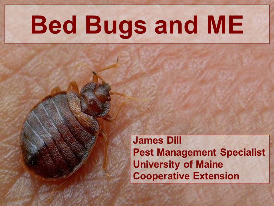 Bed Bugs and ME James Dill Pest Management Specialist University of Maine Cooperative Extension