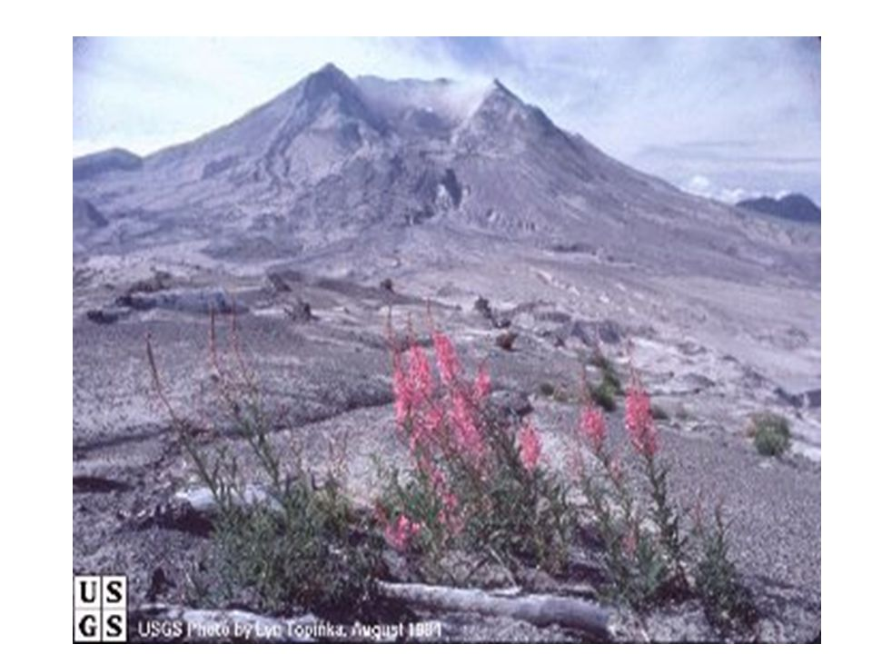 May 18, 1980 activity 1300 ft of the summit vanished Debris avalanche was more than half a cubic mile 235 square miles were devastated by blast cloud and volcanic debris 57 people dead or missing Miles of road and bridges destroyed Crater left was 1.2 miles wide, 2.4 miles long, 2000 ft deep