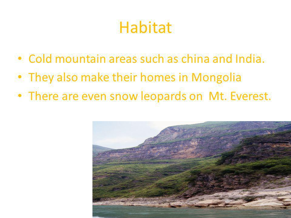 Habitat Cold mountain areas such as china and India. They also make their homes in Mongolia There are even snow leopards on Mt. Everest.