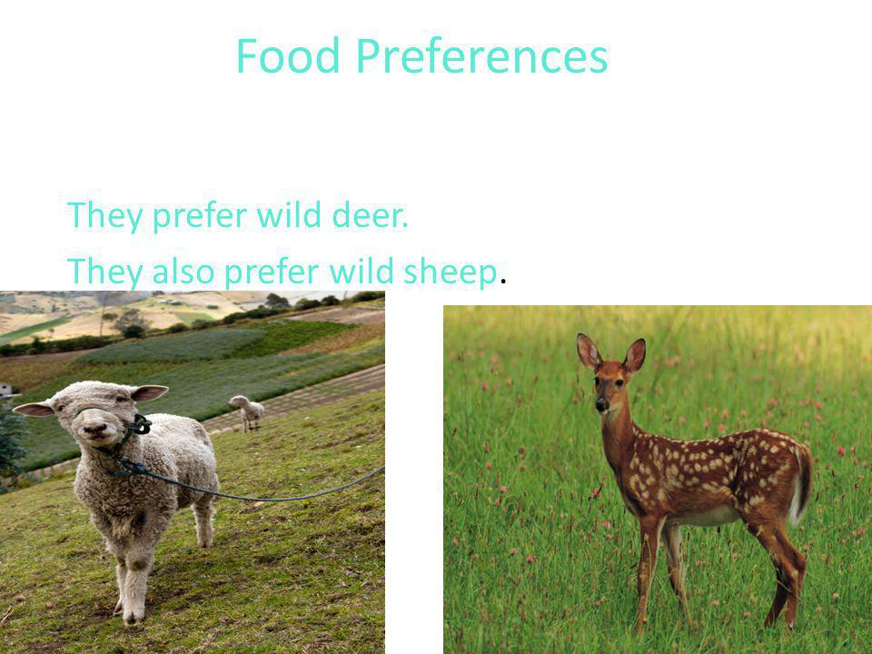 Food Preferences They prefer wild deer. They also prefer wild sheep.