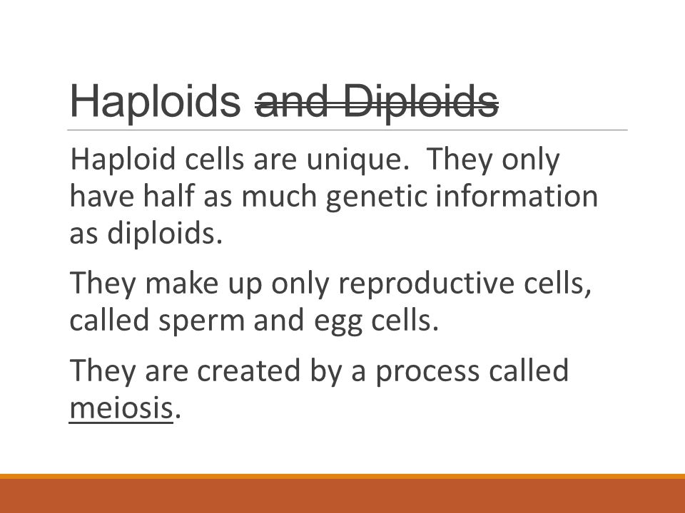 Haploids and Diploids Haploid cells are unique. They only have half as much genetic information as diploids. They make up only reproductive cells, cal