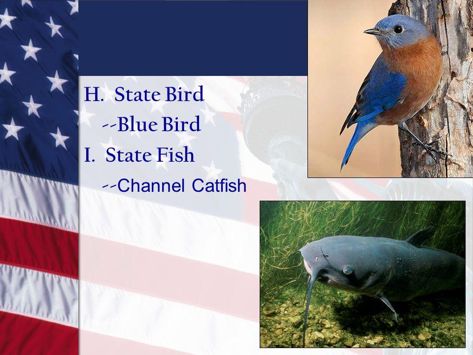 H. State Bird --Blue Bird I. State Fish -- Channel Catfish