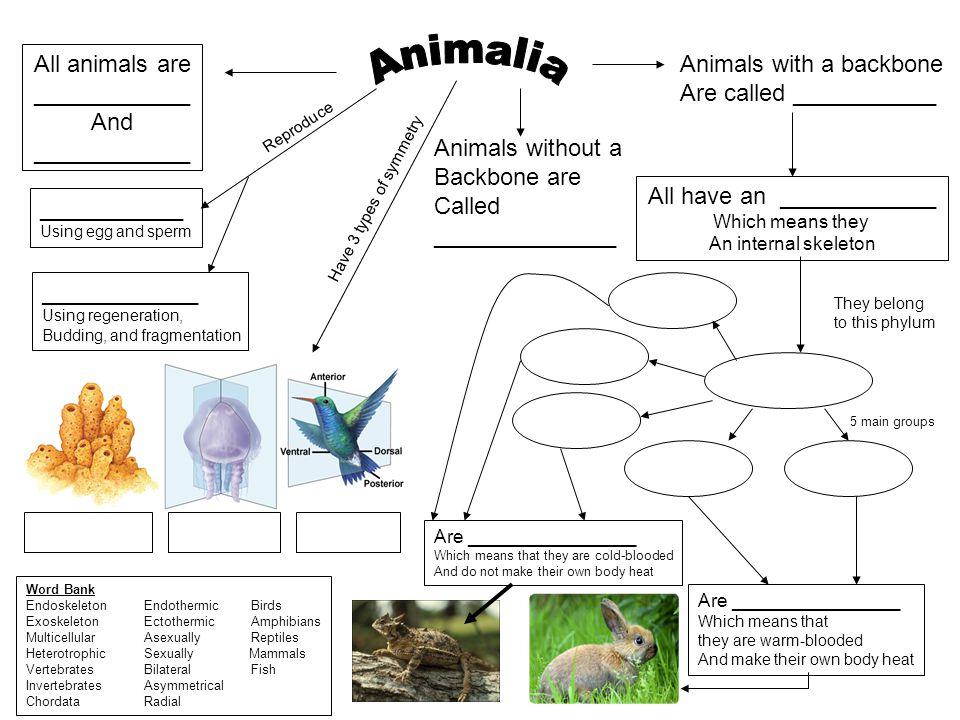 Word Bank Endoskeleton Endothermic Birds Exoskeleton Ectothermic Amphibians Multicellular Asexually Reptiles Heterotrophic Sexually Mammals Vertebrate