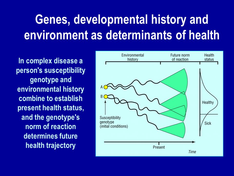 In complex disease a person s susceptibility genotype and environmental history combine to establish present health status, and the genotype s norm of reaction determines future health trajectory Genes, developmental history and environment as determinants of health