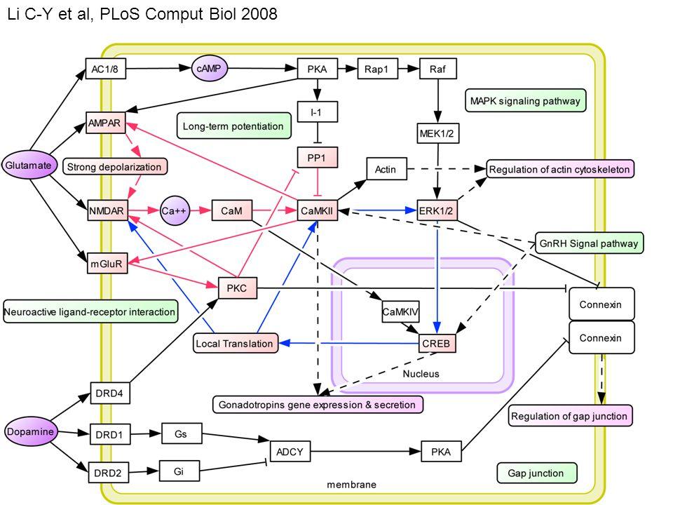 Li C-Y et al, PLoS Comput Biol 2008