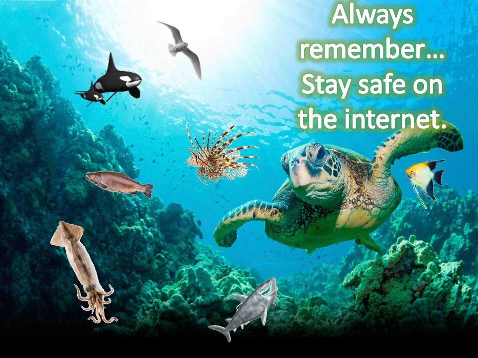 Safety first. Ask permission for internet admission.