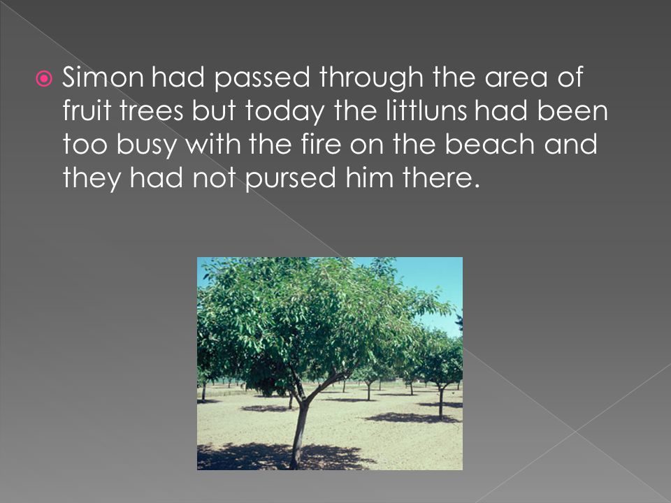  Simon had passed through the area of fruit trees but today the littluns had been too busy with the fire on the beach and they had not pursed him there.