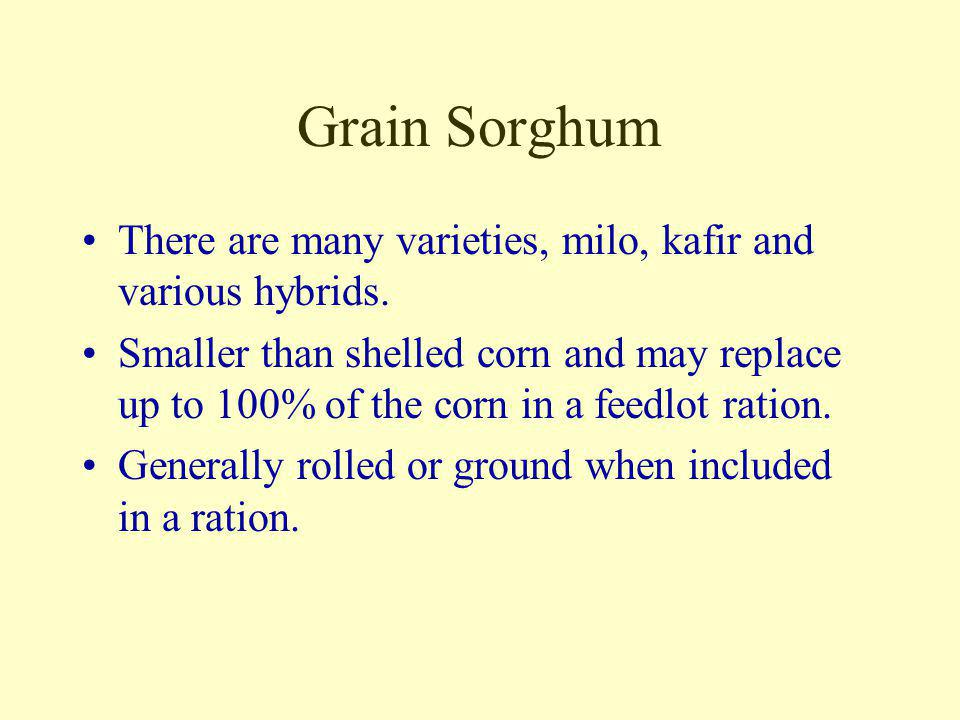 Wheat High in both energy and protein it is generally not used in livestock rations because of the high value as a small grain crop on the cash market