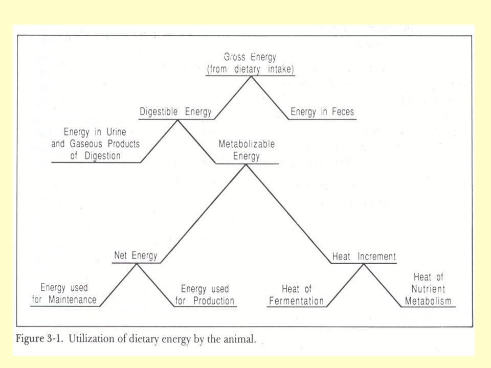 Effects of Energy Deficiency In sheep, a reduction in wool quantity and quality.