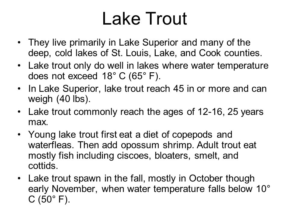 They live primarily in Lake Superior and many of the deep, cold lakes of St. Louis, Lake, and Cook counties. Lake trout only do well in lakes where wa