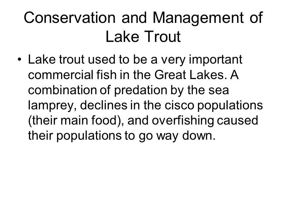 Conservation and Management of Lake Trout Lake trout used to be a very important commercial fish in the Great Lakes. A combination of predation by the
