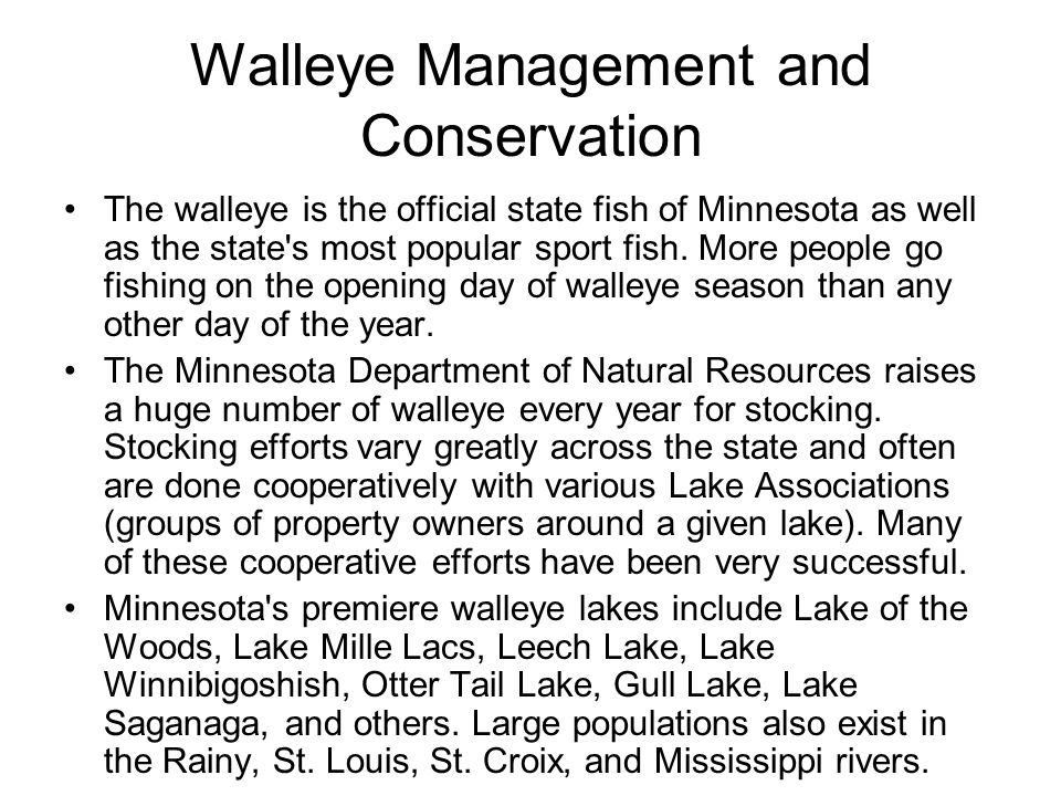 Walleye Management and Conservation The walleye is the official state fish of Minnesota as well as the state's most popular sport fish. More people go