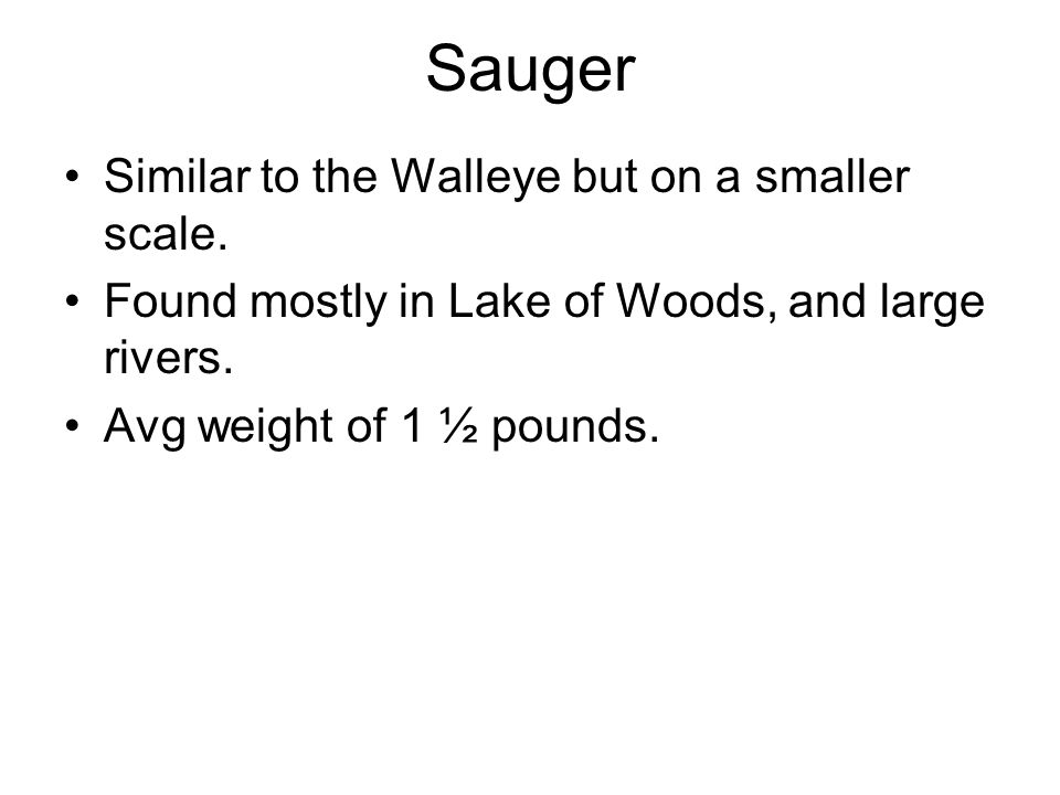 Similar to the Walleye but on a smaller scale. Found mostly in Lake of Woods, and large rivers. Avg weight of 1 ½ pounds.