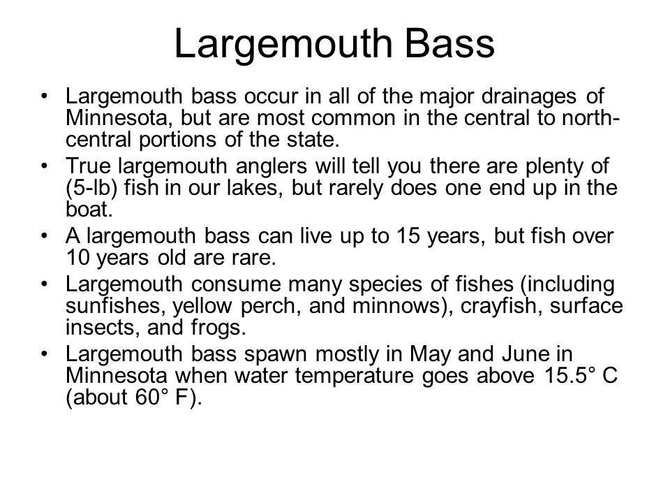 Largemouth bass occur in all of the major drainages of Minnesota, but are most common in the central to north- central portions of the state. True lar