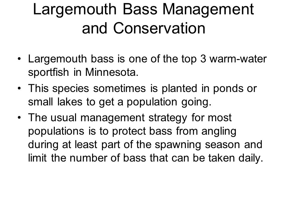 Largemouth Bass Management and Conservation Largemouth bass is one of the top 3 warm-water sportfish in Minnesota. This species sometimes is planted i
