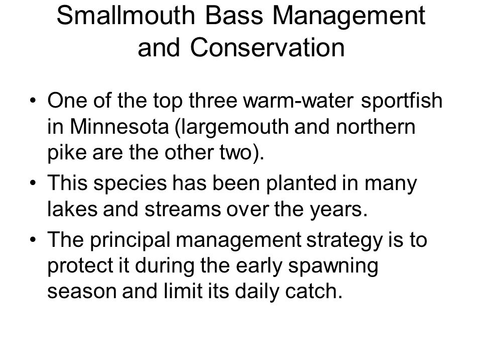 Smallmouth Bass Management and Conservation One of the top three warm-water sportfish in Minnesota (largemouth and northern pike are the other two). T