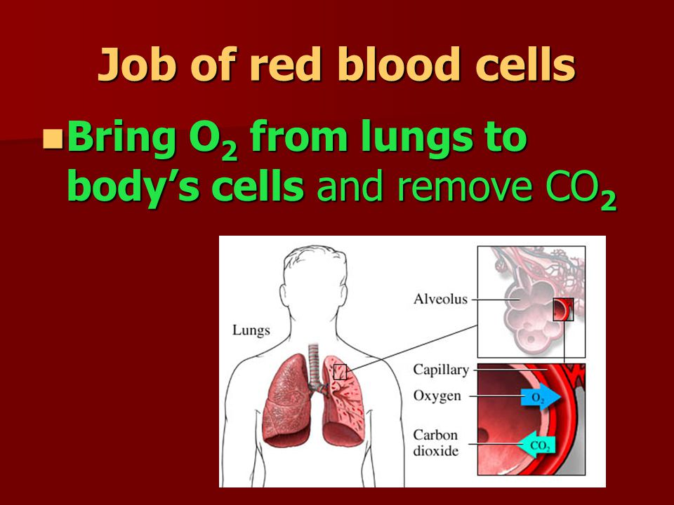 Hemoglobin found in red blood cells Protein containing iron that binds chemically to oxygen molecules (hemoglobin + O2 = bright red blood)
