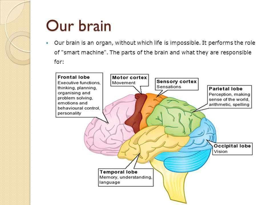 Our brain Our brain is an organ, without which life is impossible.