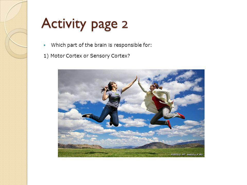 Activity page 2 Which part of the brain is responsible for: 1) Motor Cortex or Sensory Cortex