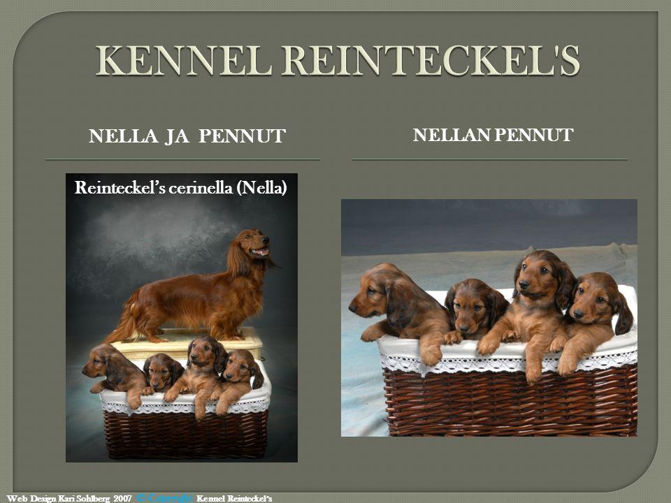 NELLA JA PENNUT NELLAN PENNUT Reinteckel's cerinella (Nella) Web Design Kari Sohlberg 2007 © Copyright Kennel Reinteckel's