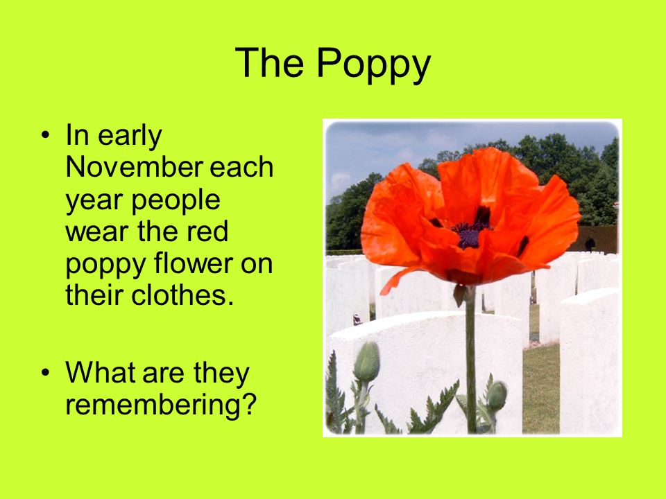 The Poppy In early November each year people wear the red poppy flower on their clothes.