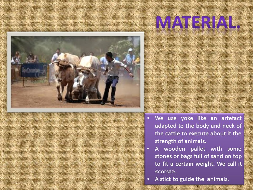 We use yoke like an artefact adapted to the body and neck of the cattle to execute about it the strength of animals.