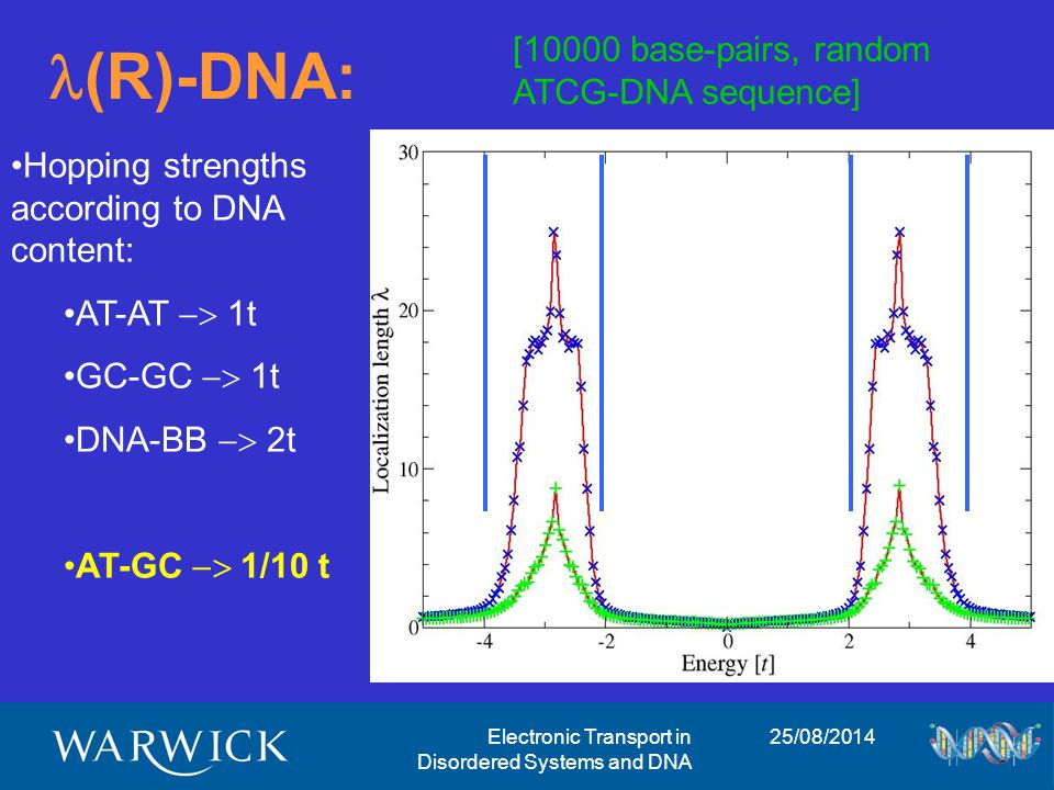 25/08/2014Electronic Transport in Disordered Systems and DNA (R)-DNA: [10000 base-pairs, random ATCG-DNA sequence] Hopping strengths according to DNA content: AT-AT  1t GC-GC  1t DNA-BB  2t AT-GC  1/10 t