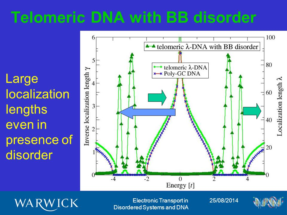 25/08/2014Electronic Transport in Disordered Systems and DNA Telomeric DNA with BB disorder Large localization lengths even in presence of disorder