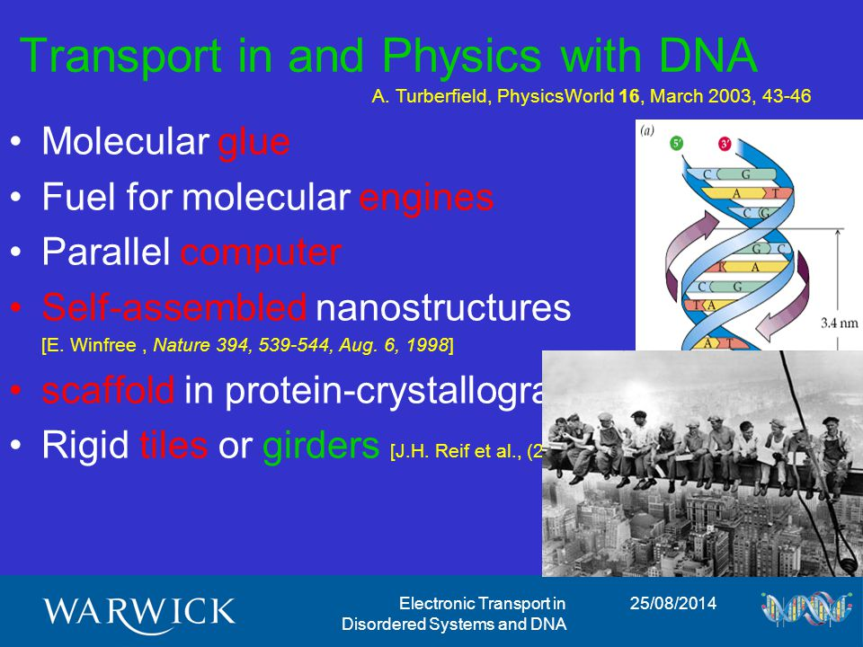 25/08/2014Electronic Transport in Disordered Systems and DNA Transport in and Physics with DNA Molecular glue Fuel for molecular engines Parallel computer Self-assembled nanostructures [E.