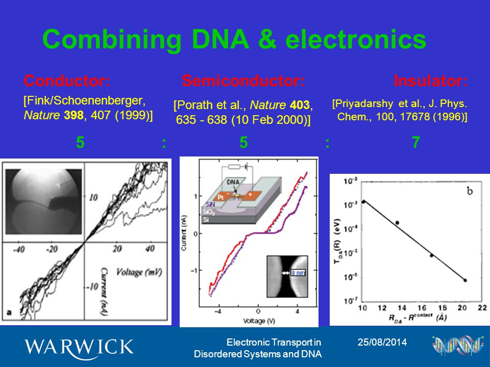 25/08/2014Electronic Transport in Disordered Systems and DNA Influence of backbone disorder Backbone (BB) disorder used to model environment/solution into which DNA is immersed BB disorder leads to a rescaling of the semi-conducting gap This might explain diversity of experimental observations [Klotsa, RAR, Turner, submitted (2004)]