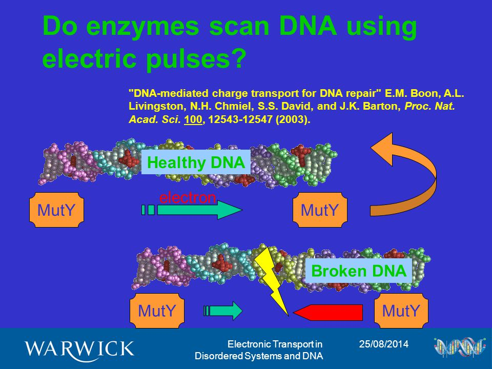 25/08/2014Electronic Transport in Disordered Systems and DNA Disordered Quantum Systems DNA: D.